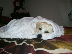 phil in a blanket