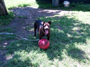 sable with ball and tongue
