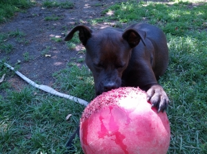 Sable with ball