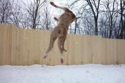 gipsy jumping