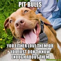 pit bull u either love them